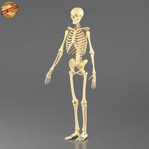 obj human skeleton