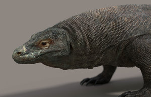komodo dragon 3d obj
