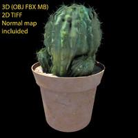 cactus 2d transparency 3d fbx