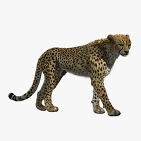 Cheetah 2 (RIGGED) (FUR)
