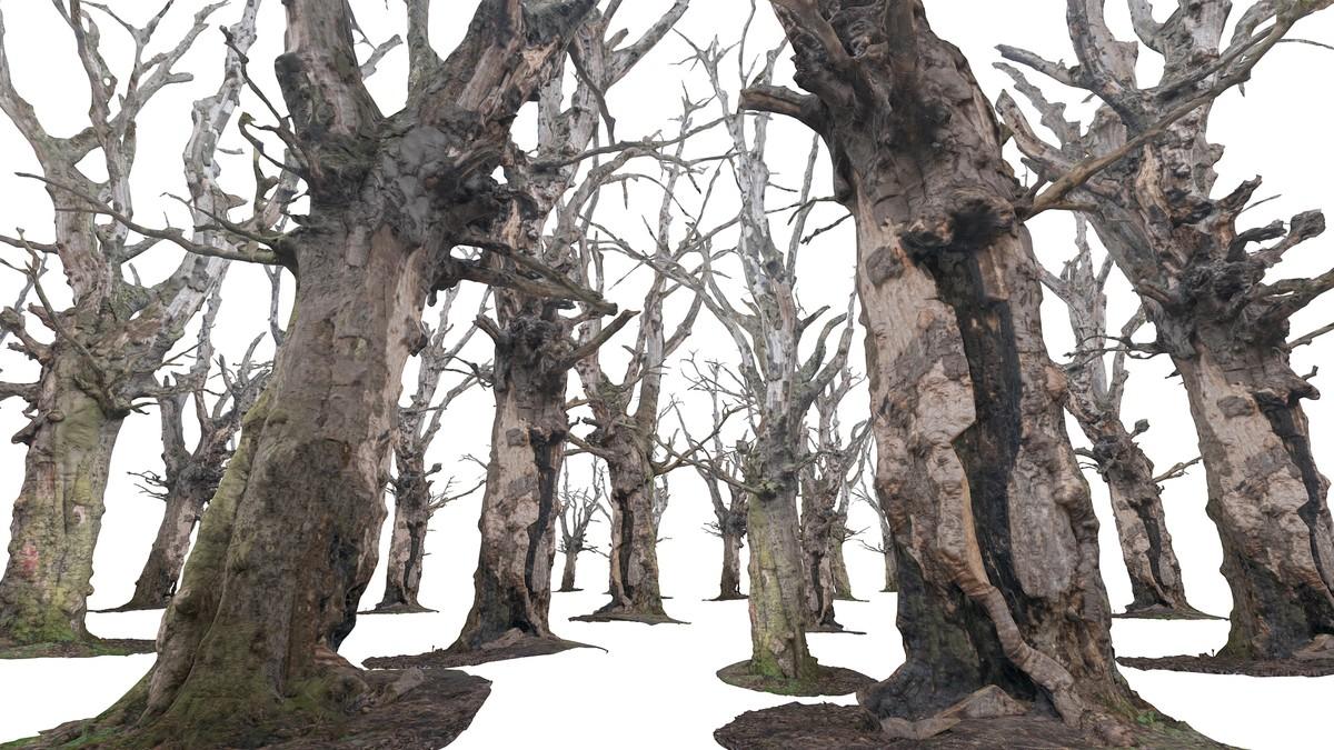 3d obj old forest