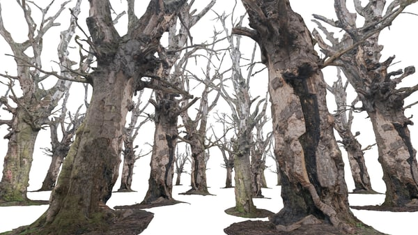 3d obj old forest