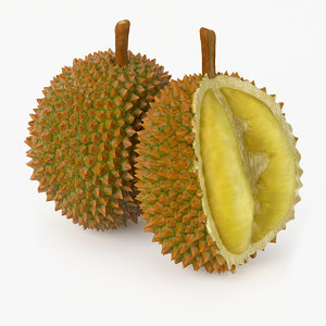 realistic durian fruit real 3d model