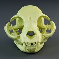 3d skull cat british short model