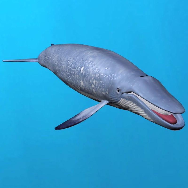 blue whale 3ds