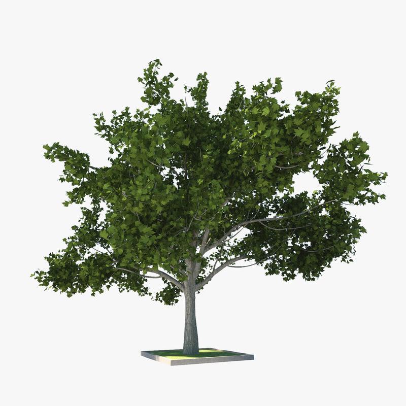 3d wood tree model