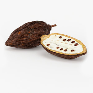 realistic cocoa pod real 3d x