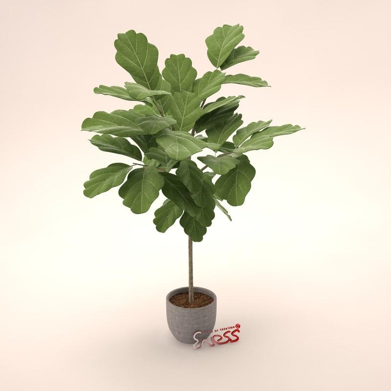 3d potted tree oak