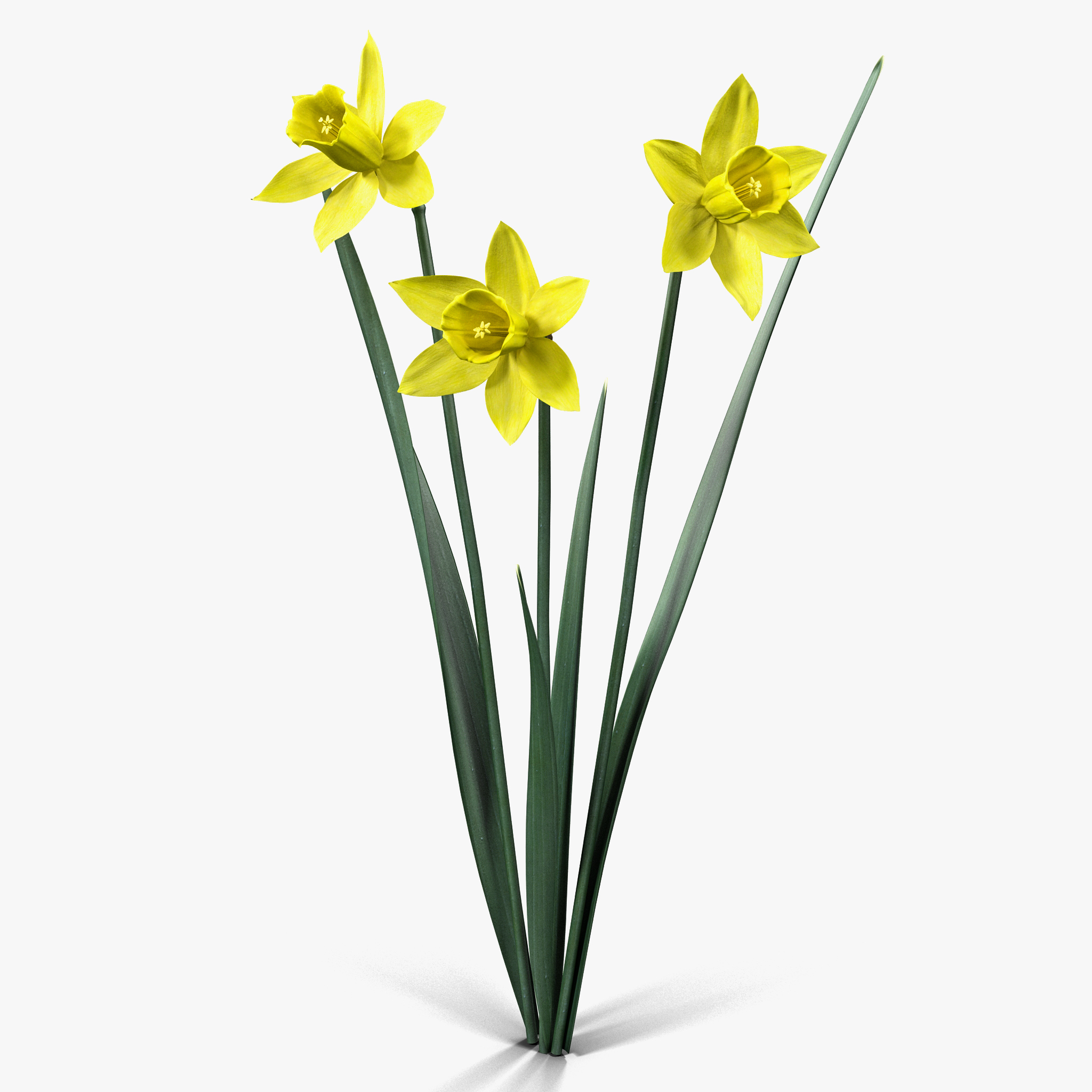 Fiori 3ds.Modello 3d Daffodil Di Fiori Turbosquid 884217