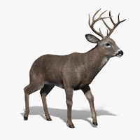 White Tailed Deer(FUR)(RIGGED)