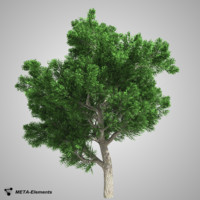 free obj model broadleaf tree leaves