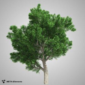 free obj model broadleaf tree leaves