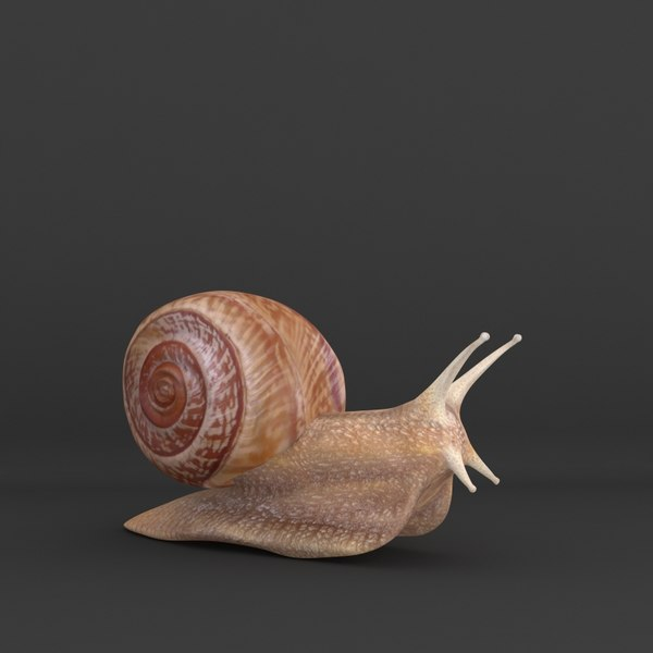 3ds max realistic snail