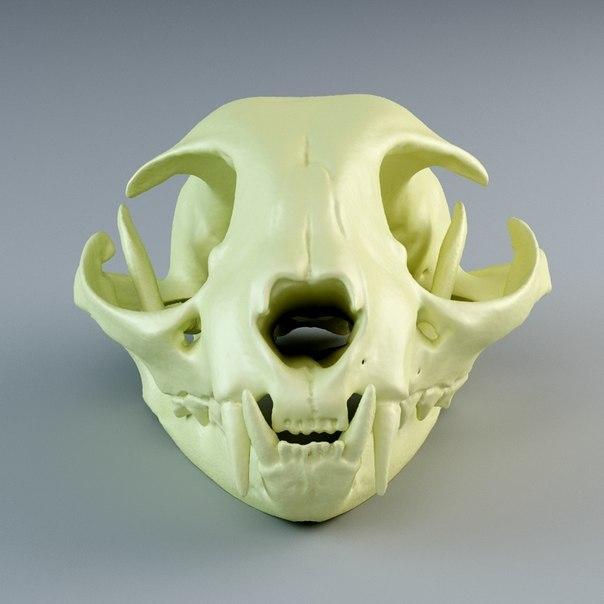 maya domestic cat skull