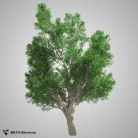 Broadleaf Tree 02