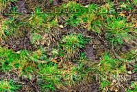 Muddy ground with weeds 1