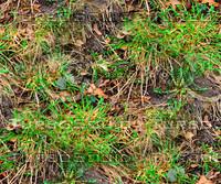 Muddy ground with weeds 2