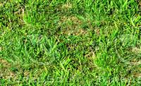 Rough grass 2