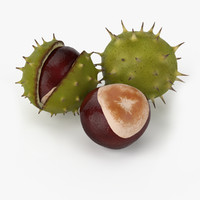 3d model realistic chestnut real