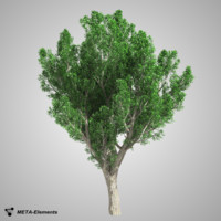 3d broadleaf tree
