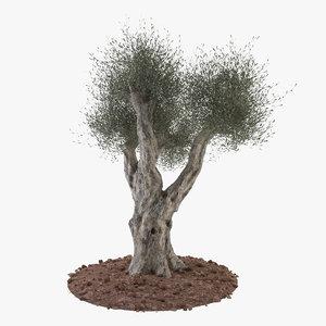 3dsmax olive tree