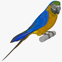 Blue and Gold Macaw Pose 1