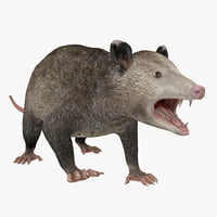 possum rigged 3d model