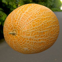 Cantaloupe Melon High And Low Poly Sliced