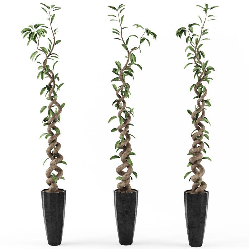 3d ficus tree