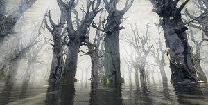3d model wetlands swamps land