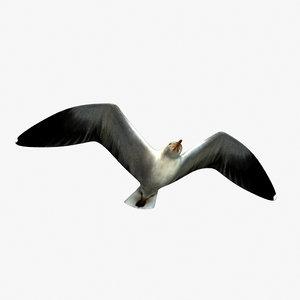 3d model gull anition
