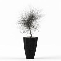 max dry tree