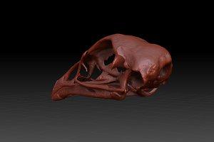 obj skull chicken gallus domesticus