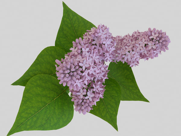 3d model branch pink lilac