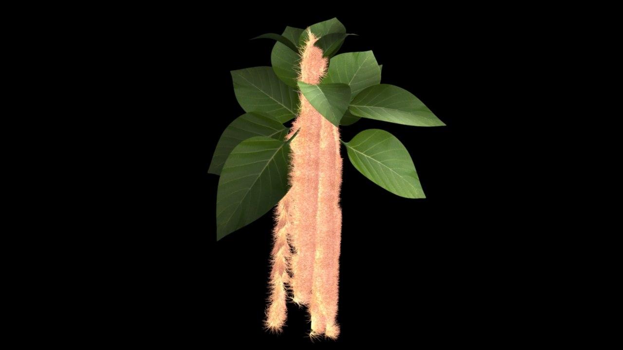 amaranthus amaranth 3d obj