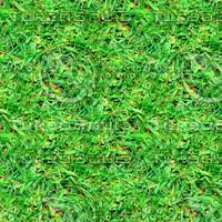 Rough grass 3
