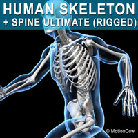 human skeletal rigged skeleton 3d c4d