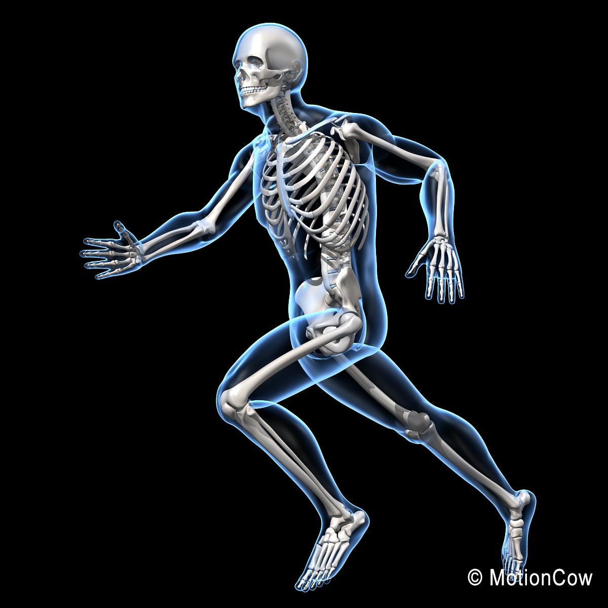 human skeletal rigged skeleton 3d c4d