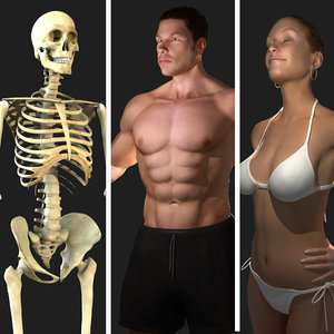 3d ultimate anatomy rigged pack