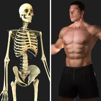 Skeleton /  Male Rigged Combo