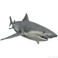 realistic male bull shark 3d model