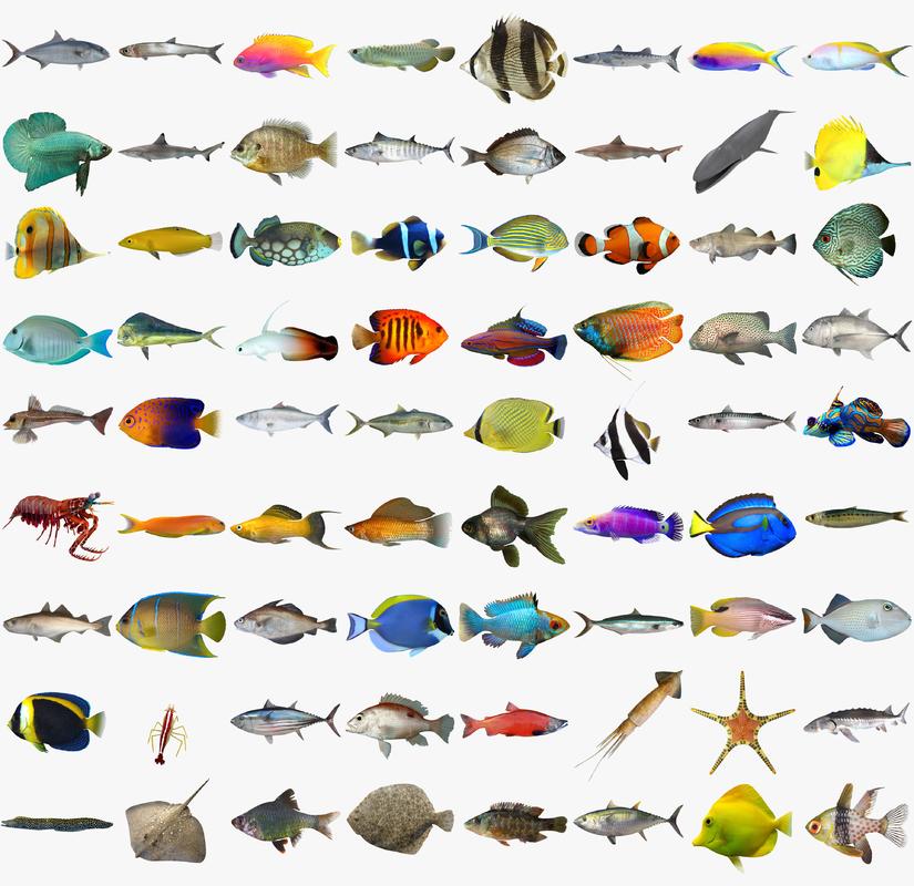 fish sharks shrimp 3d max