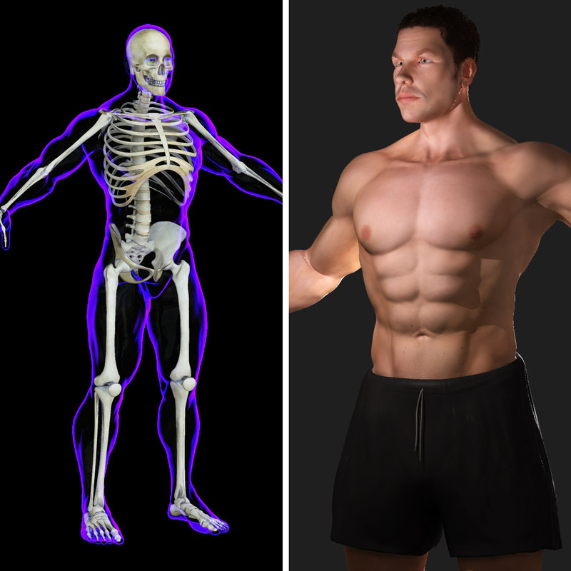 maya rigged x-ray skeleton male body