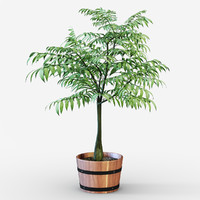 max tree plant