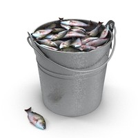 Fish in bucket
