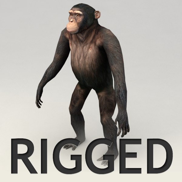 chimpanzee rigged biped 3d model