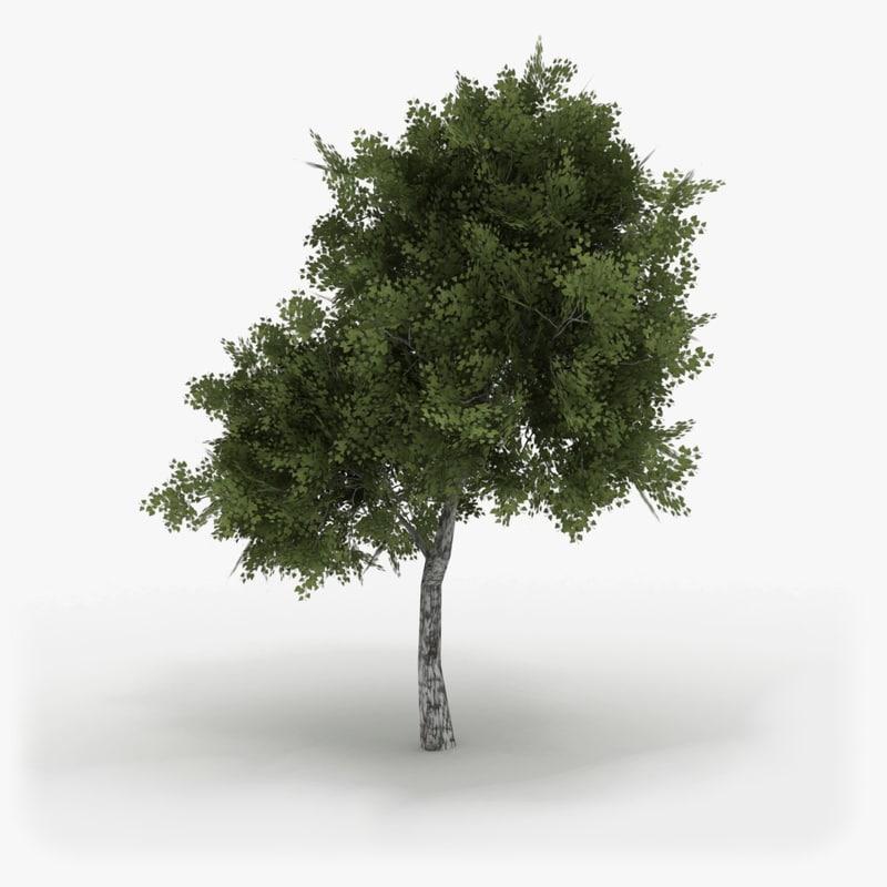 realistic hi-poly birch tree 3d max