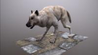max wolf polys ready