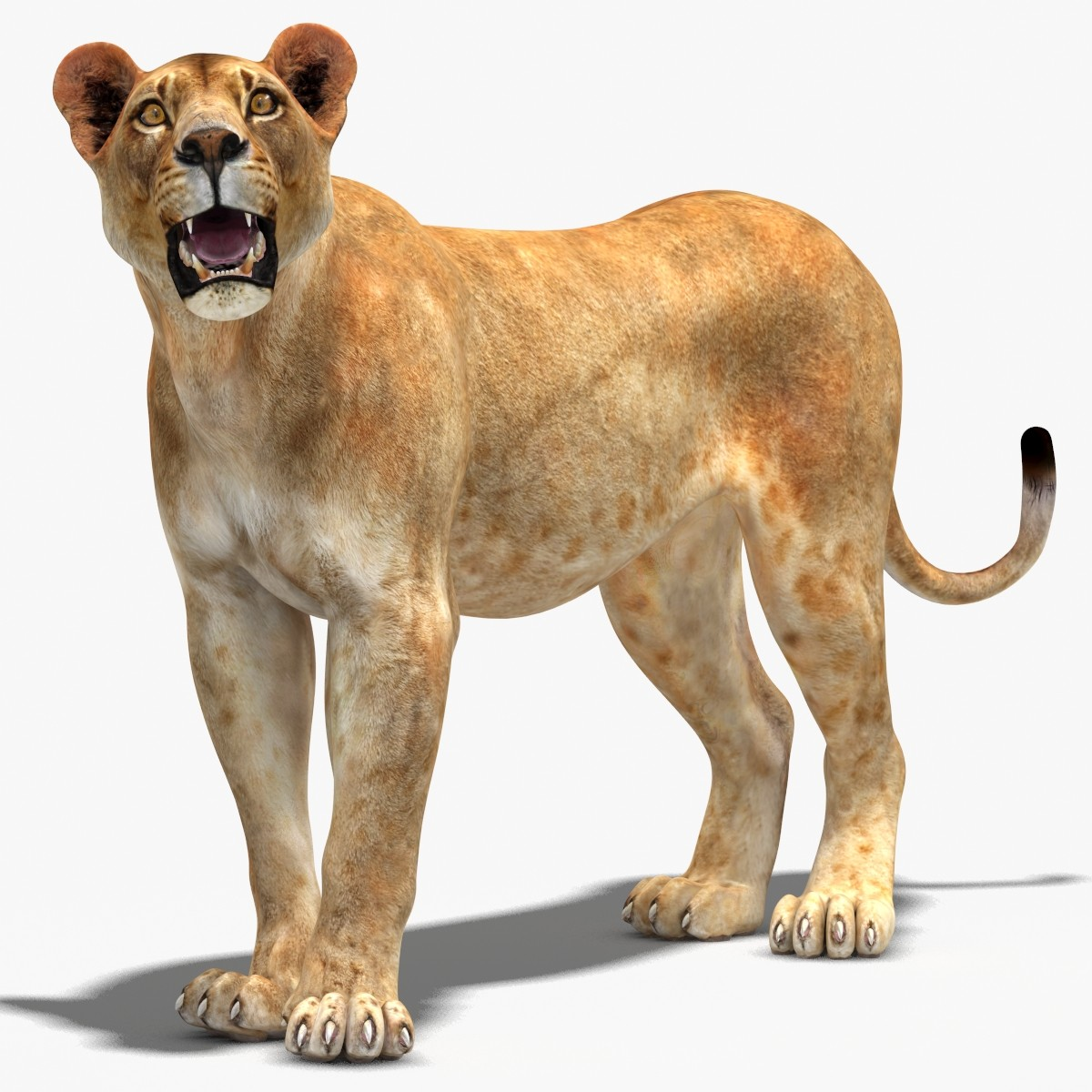 3d model lioness rigged cat animation