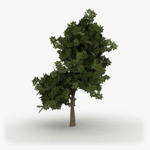 3d realistic oak tree